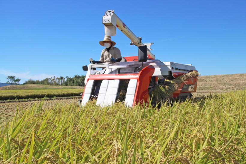 平田自然栽培米収獲