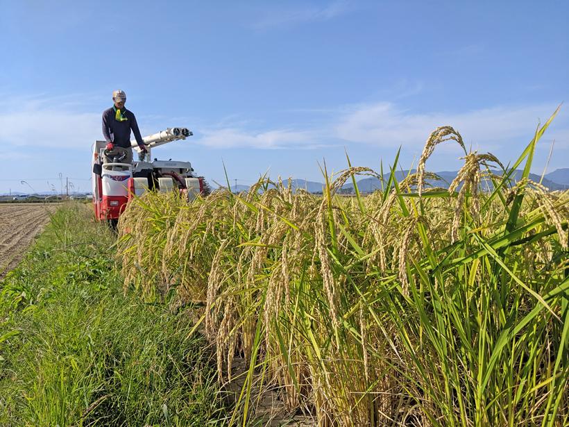 自然栽培米の収穫風景