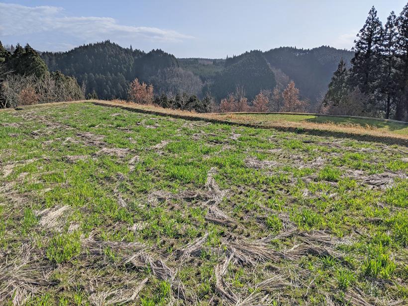 渡辺自然栽培米田んぼの冬