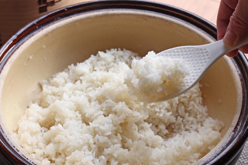白米・玄米・分搗き米・胚芽米と何が違うの?