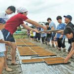 自然栽培米の播種・苗箱運びでは楽しい波動が大事