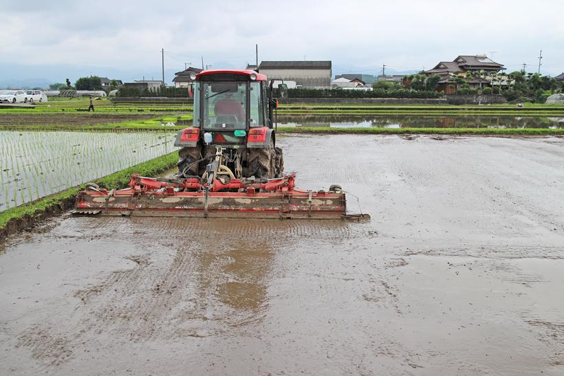 冨田自然栽培米の代かきと田植えの特徴