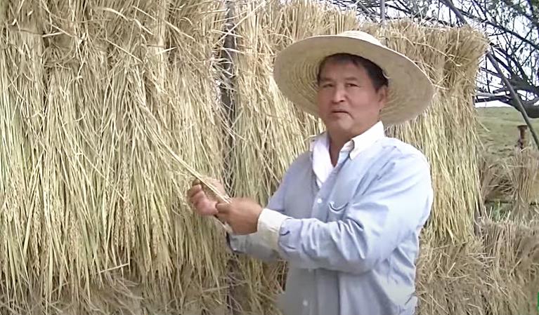 冨田さんの自家採種