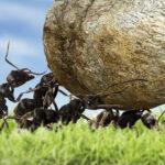 アリが教えてくれる2:6:2の法則|自然の教え