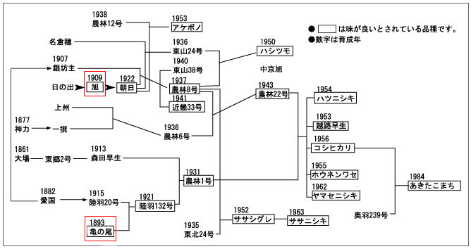 旭亀の尾の系譜