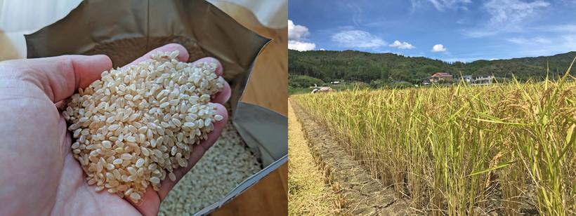 川﨑自然栽培米