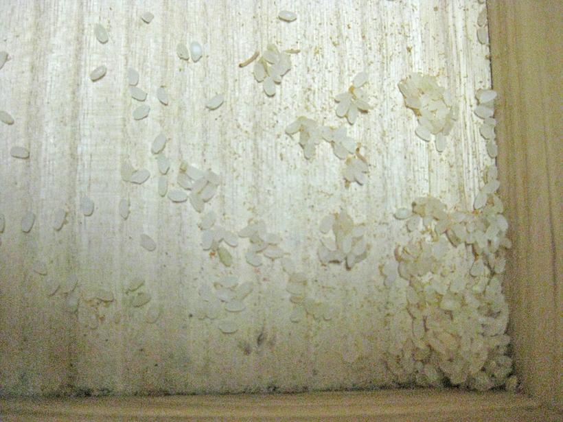 ノシメマダラメイガの幼虫の掃除