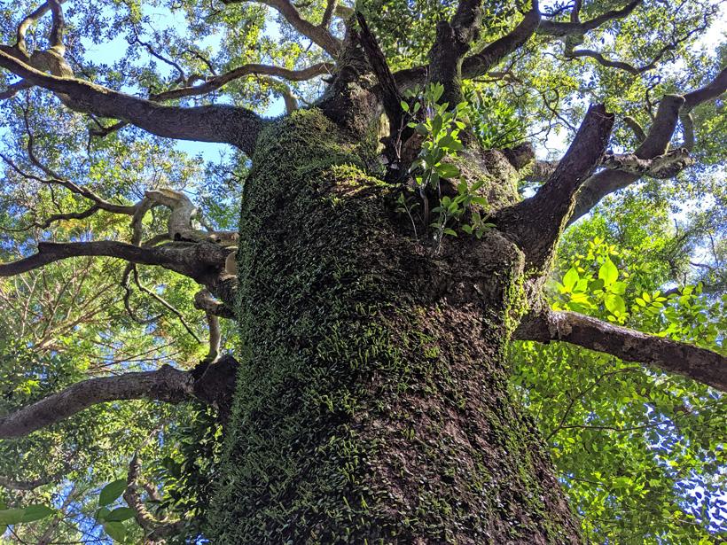 根、幹、枝葉を人間に例えると|自然栽培の教え