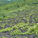 自然の植生遷移から見る変化の法則|自然の教え