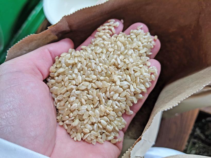 ヒノヒカリ玄米