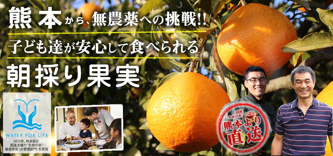 無農薬に挑戦の果樹サイト