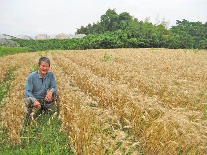 冨田さんと小麦畑